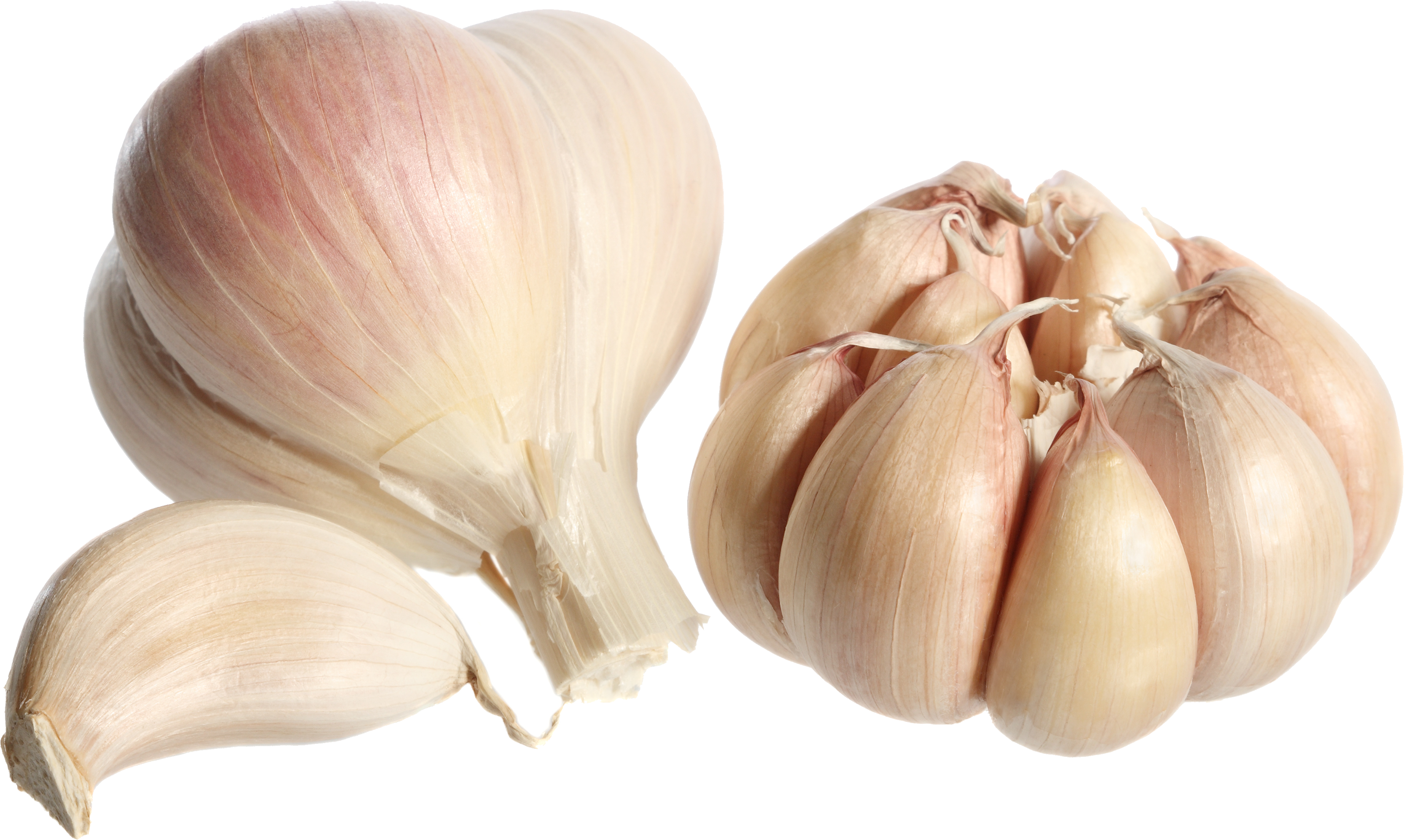 garlic png images for download crazypngm #25552