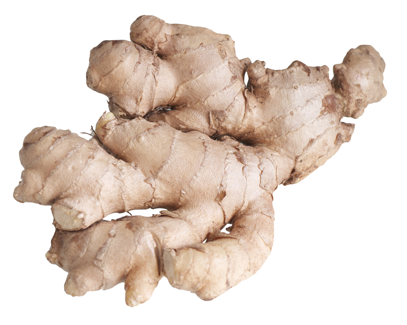 ginger png image collection for download #27475