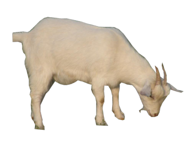 goat png images #16834