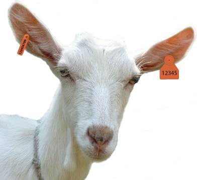 goat png images #16850