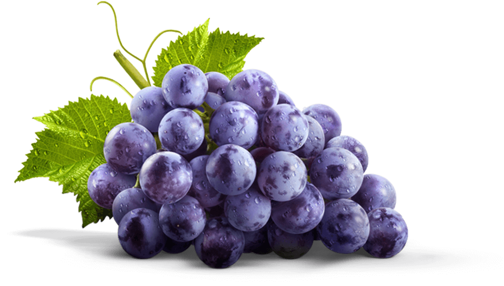 Grape PNG Transparent Grapes Clipart Images Free Download ... (1000 x 567 Pixel)