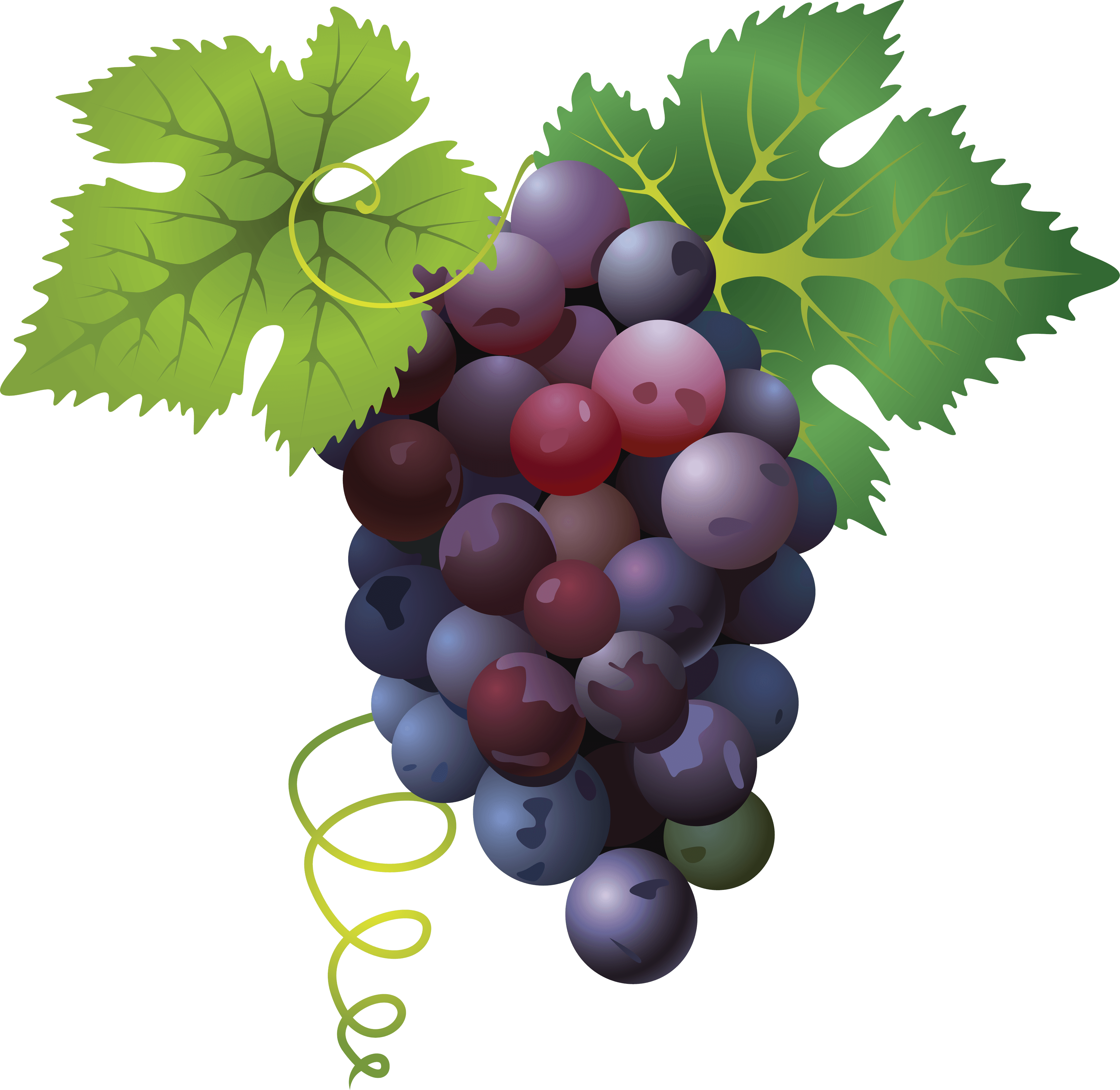 grapes, grape png transparent images png only #16986
