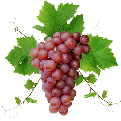 grapes, red grape with leaves transparent png stickpng #16990