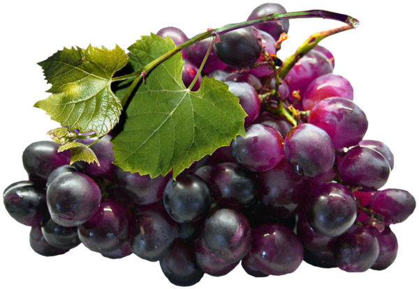 Grape Png Transparent Grapes Clipart Images Free Download