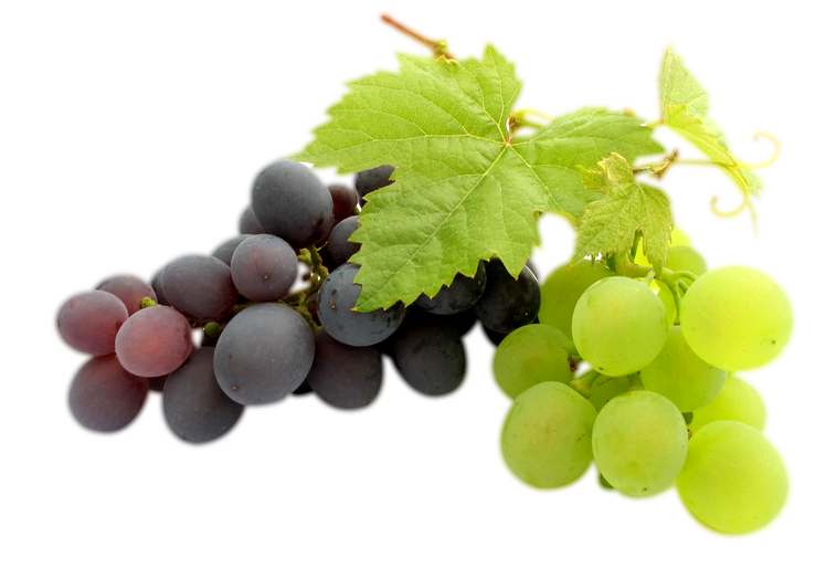 transparent clipart image grapes png black and green with #17031