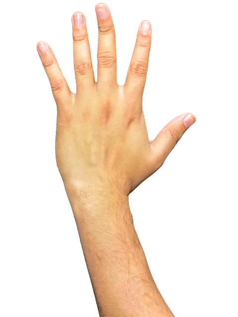 hand png hands fingers arm photo pixabay #10574