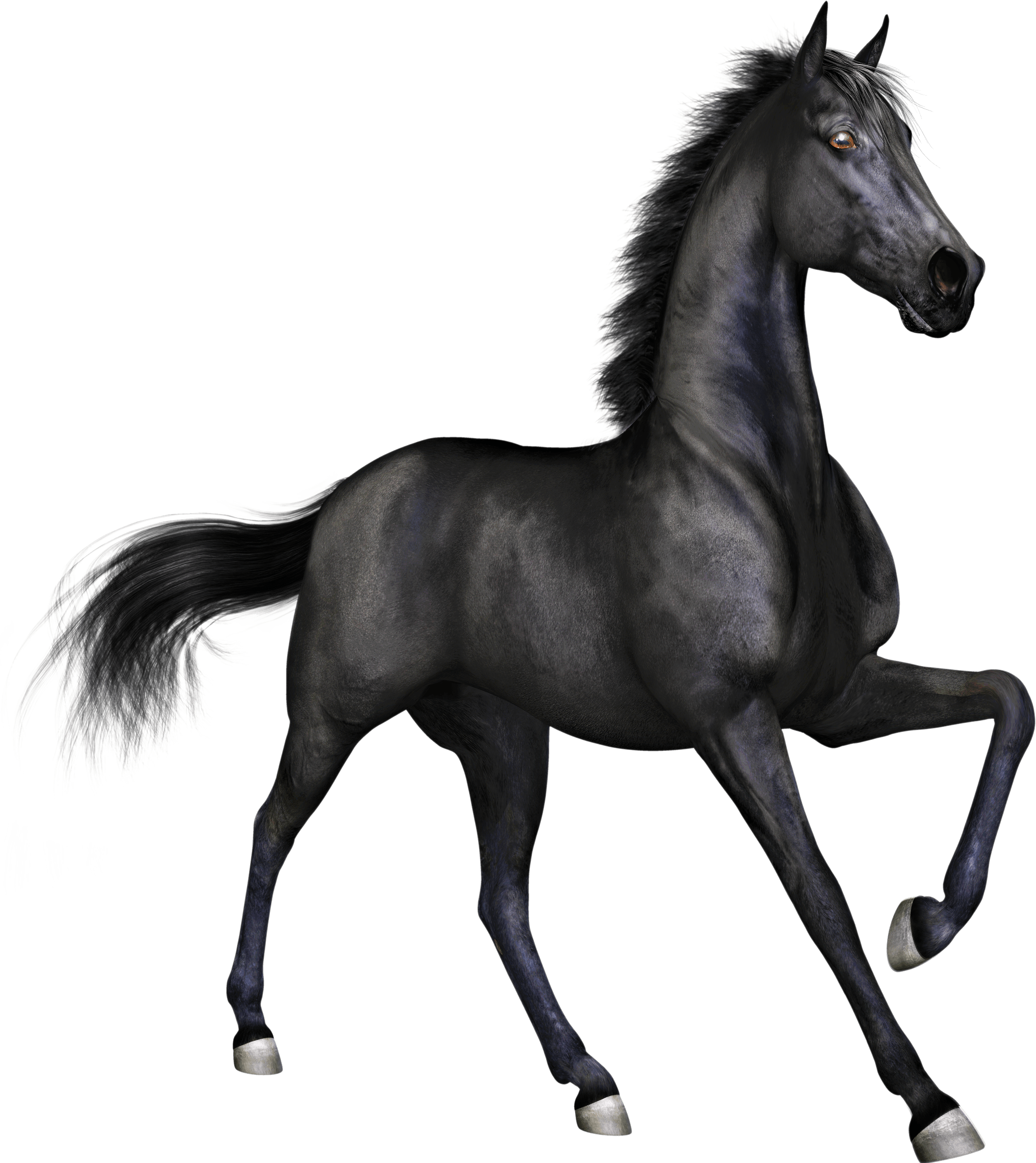 black race horse transparent png stickpng #15751