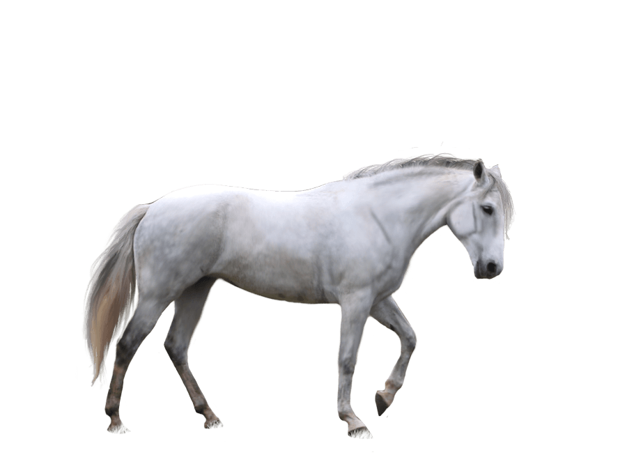 download horse png image download picture transparent #15763