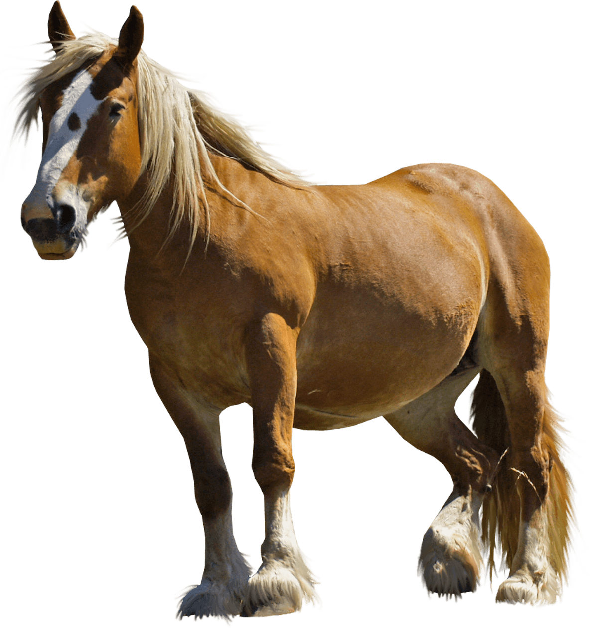 farm horse transparent png stickpng #15747