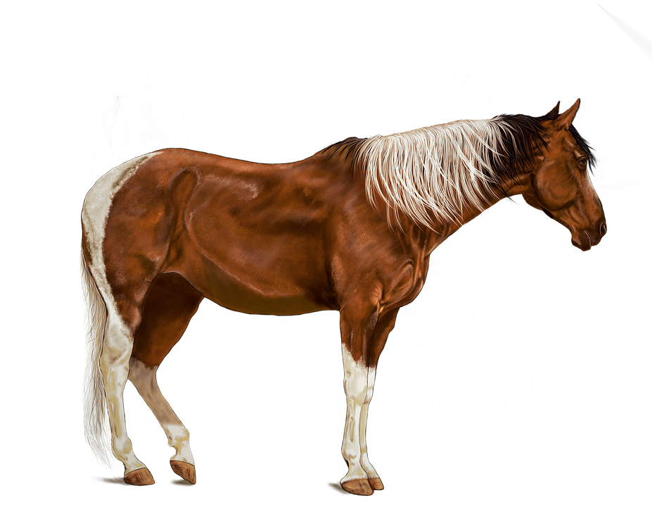 horse brown art digital image pixabay #15748