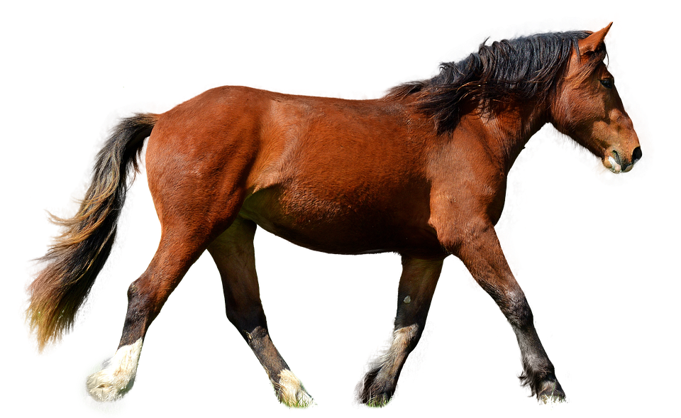 horse isolated brown photo pixabay #15698