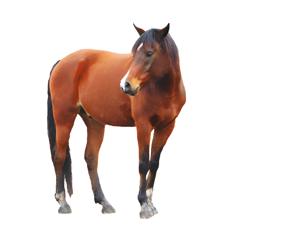 horse transparent png pictures icons and png #15741