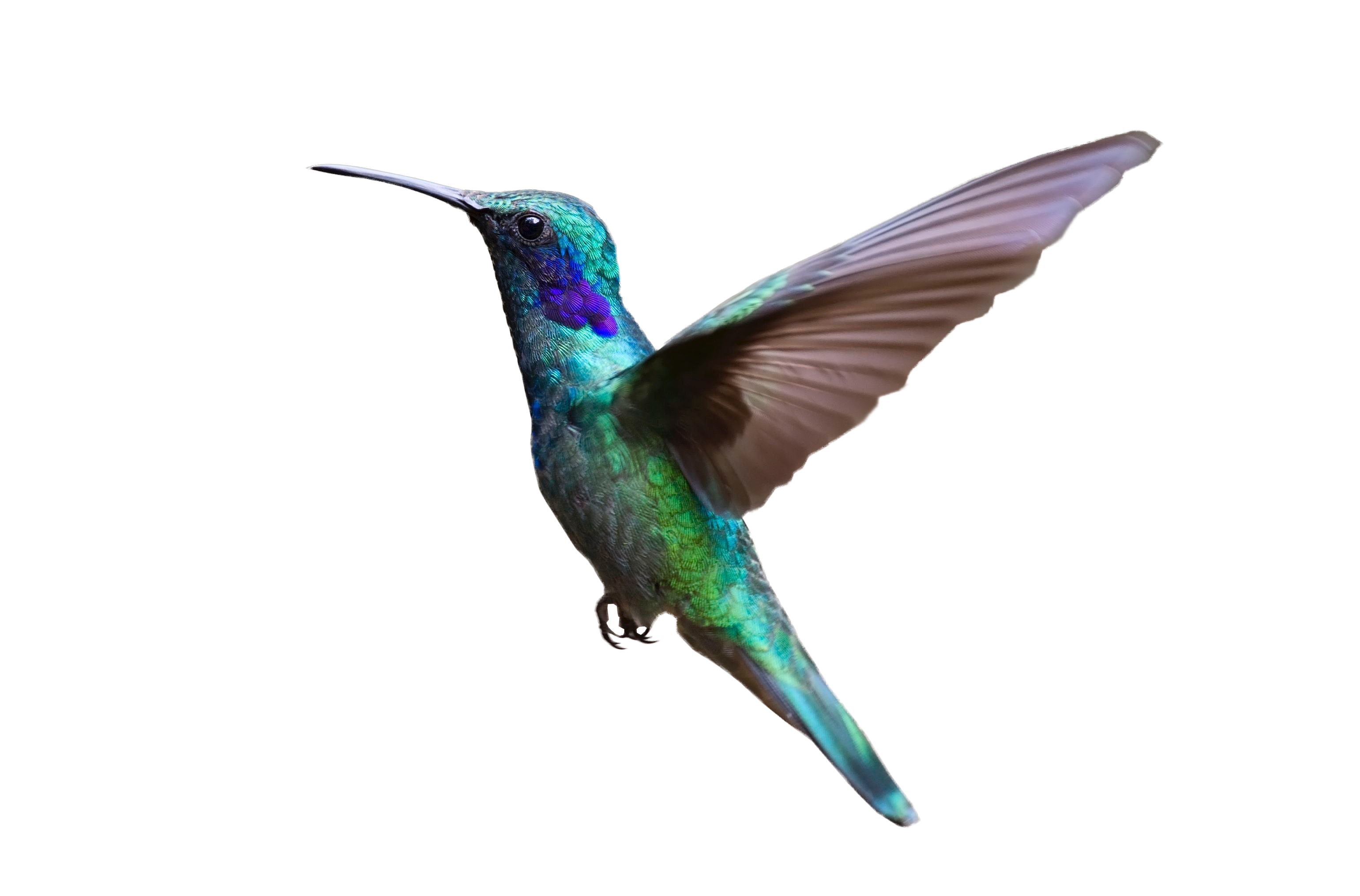 colorful hummingbird flying png image purepng #36726
