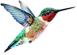 google hummingbird why what have learned what you #36814