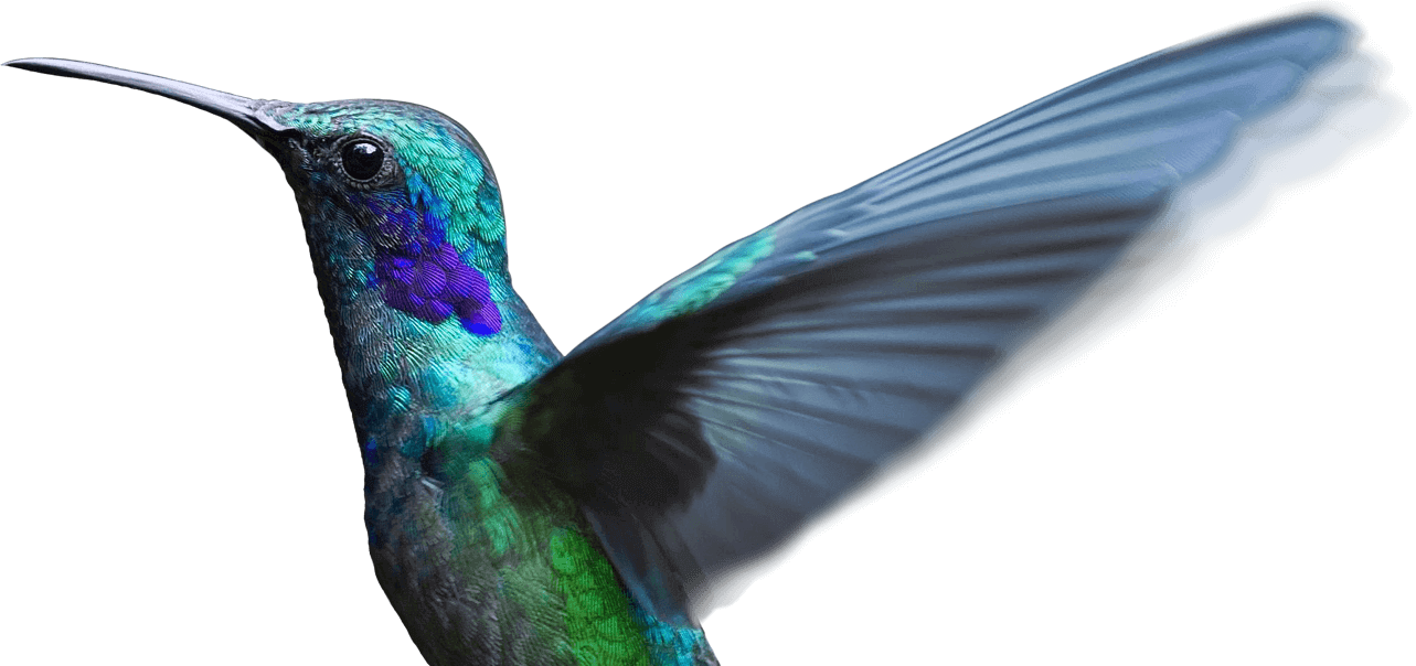 hummingbird annotate images and videos thinglink #36756