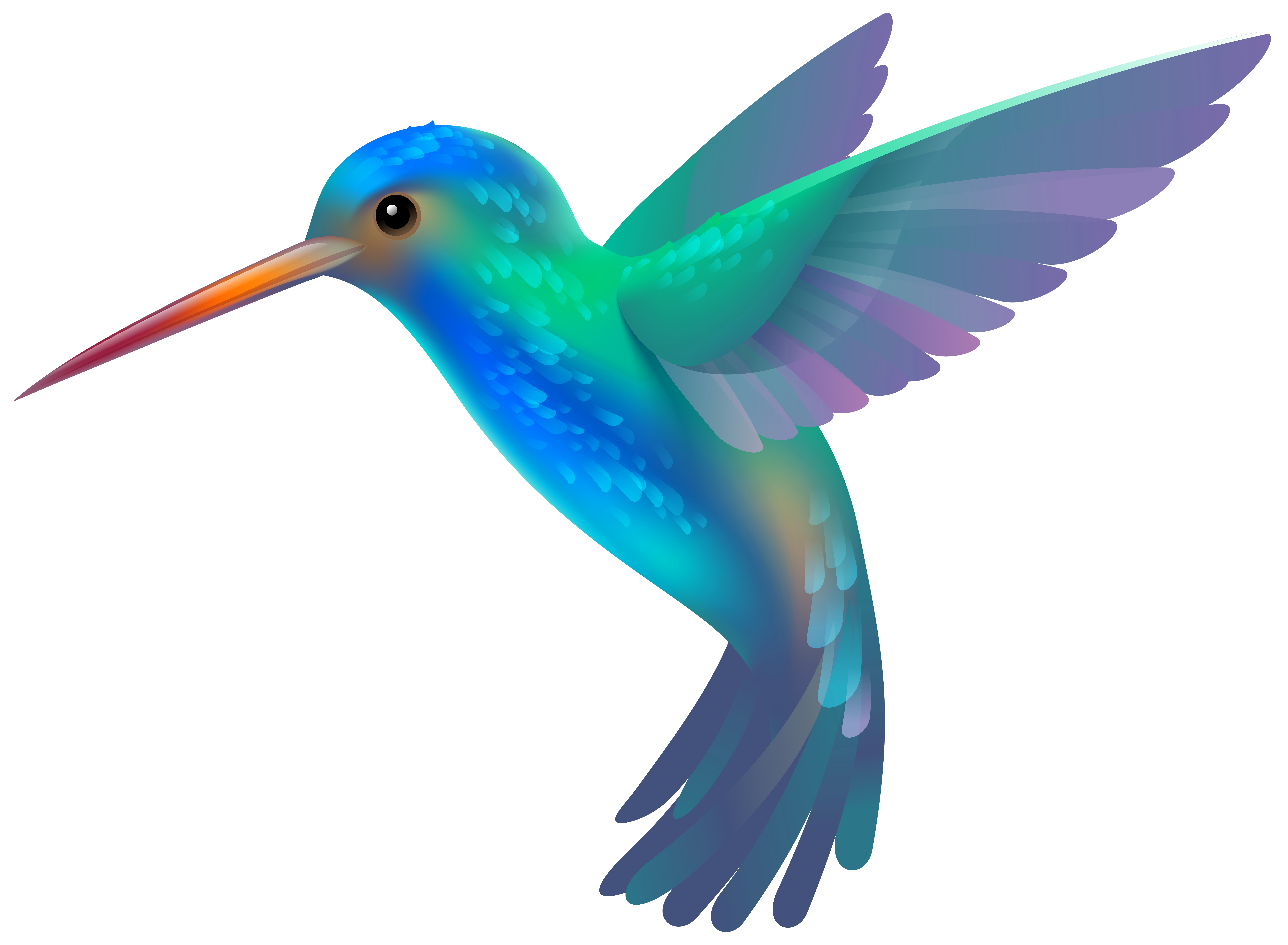 hummingbird clipart clipartix #36810