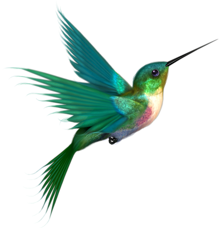 hummingbird flight photo lee photobucket #36733