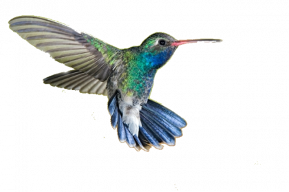 hummingbird png images transparent download pngmartm #36755