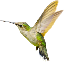 hummingbird png transparent images png only #36799