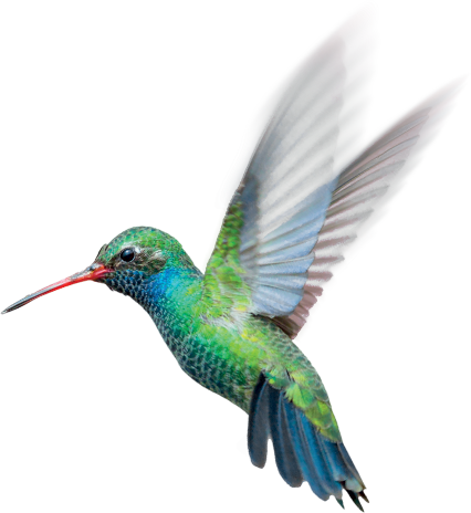 hummingbird secure greenpeace donate now receive your headset #36786