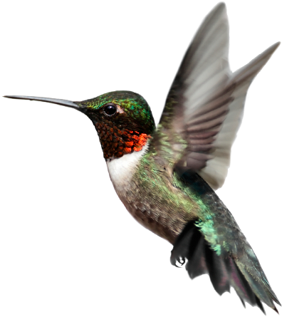 hummingbird sharbat #36764