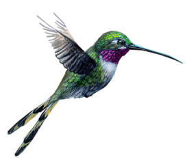 popular and trending hummingbird stickers picsart #36732