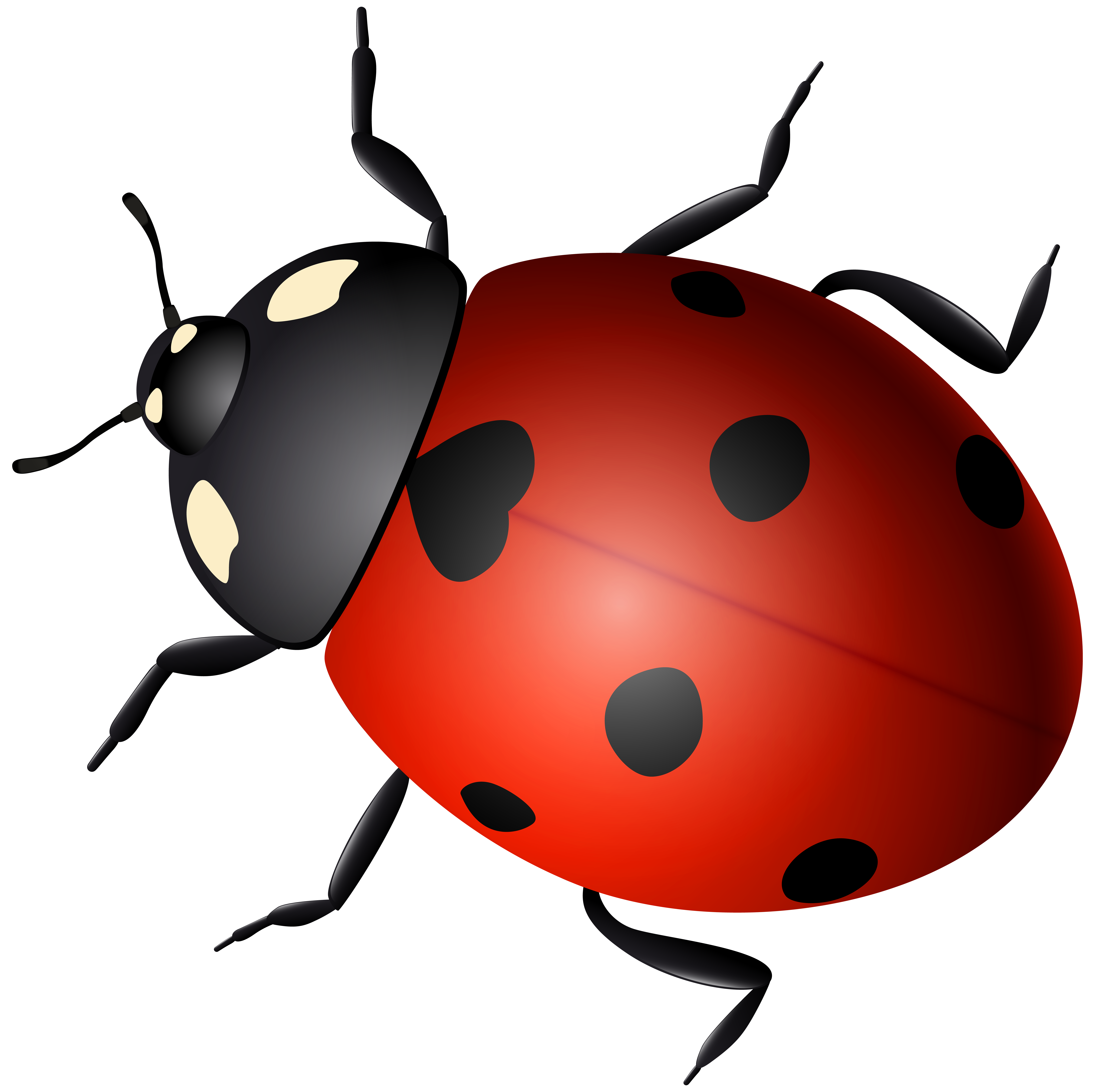 ladybug decorative transparent image gallery yopriceville high quality images and #29703