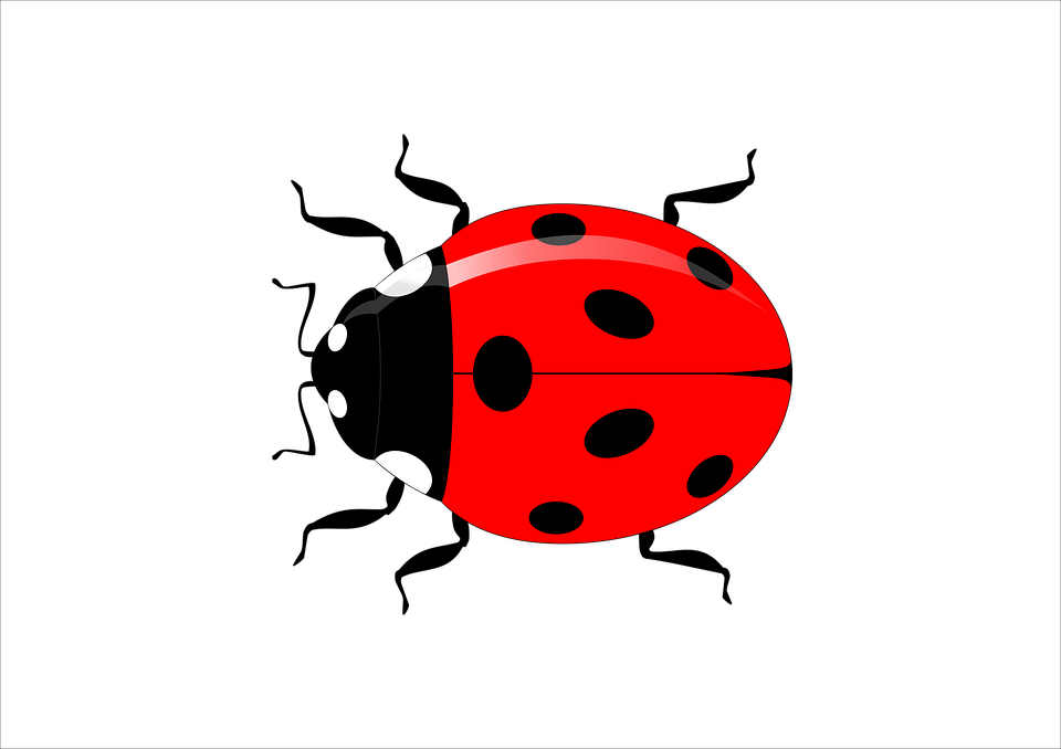 ladybug insect vector vector graphic pixabay #29633