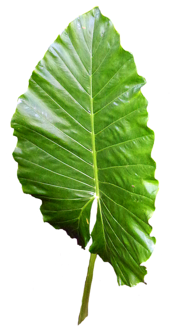 leaf green leaves image pixabay 9877