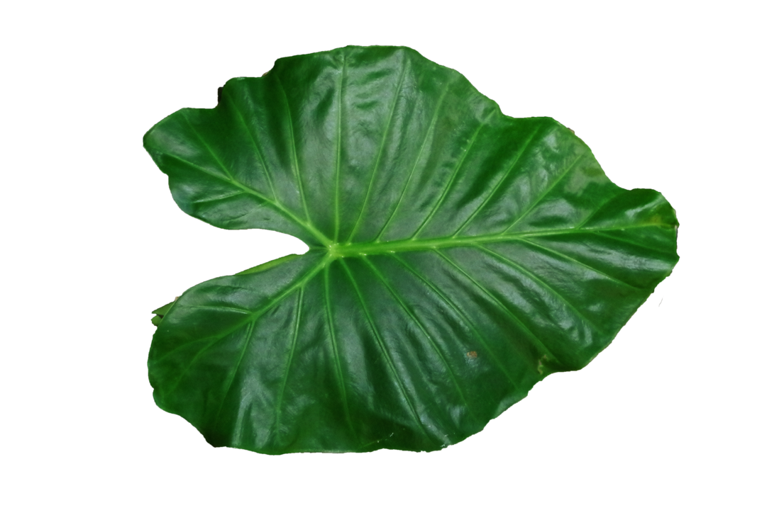 leaf png shadow lovepngs deviantart 9878