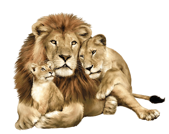 download lion png image image download picture lions #11223