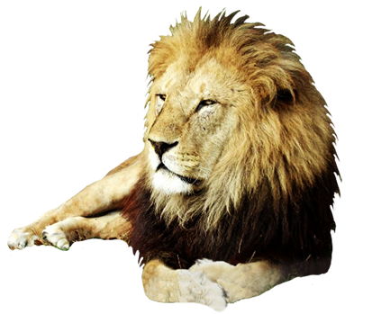 lion png animal clip art #11304