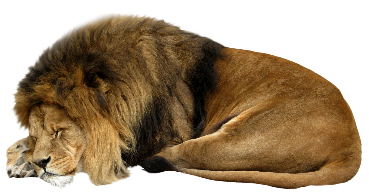 lion png transparent image fro images #11292