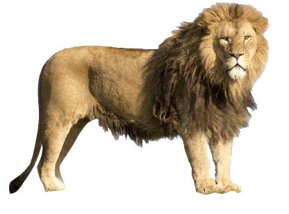 lion transparent background image animal web design graphics #11301