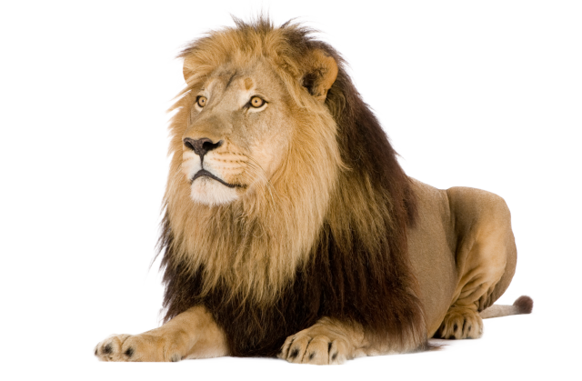lion transparent png file web icons png #11273
