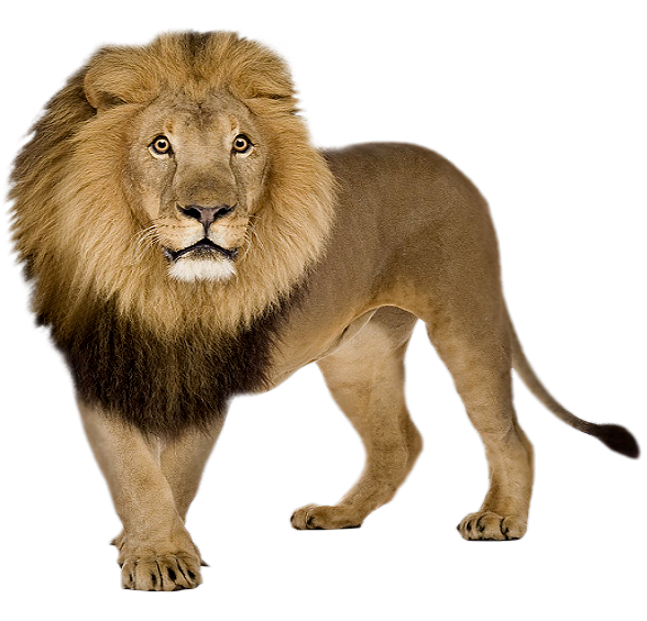 png format images lion icons and png #11297