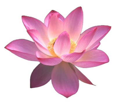 lotus flower png images download #26573