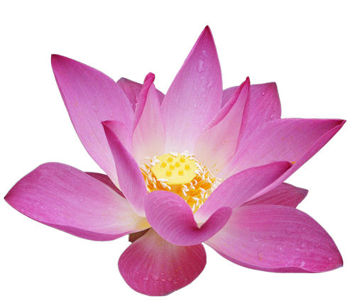 lotus flower png images download #26518