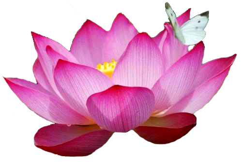 lotus flower png images download #26589