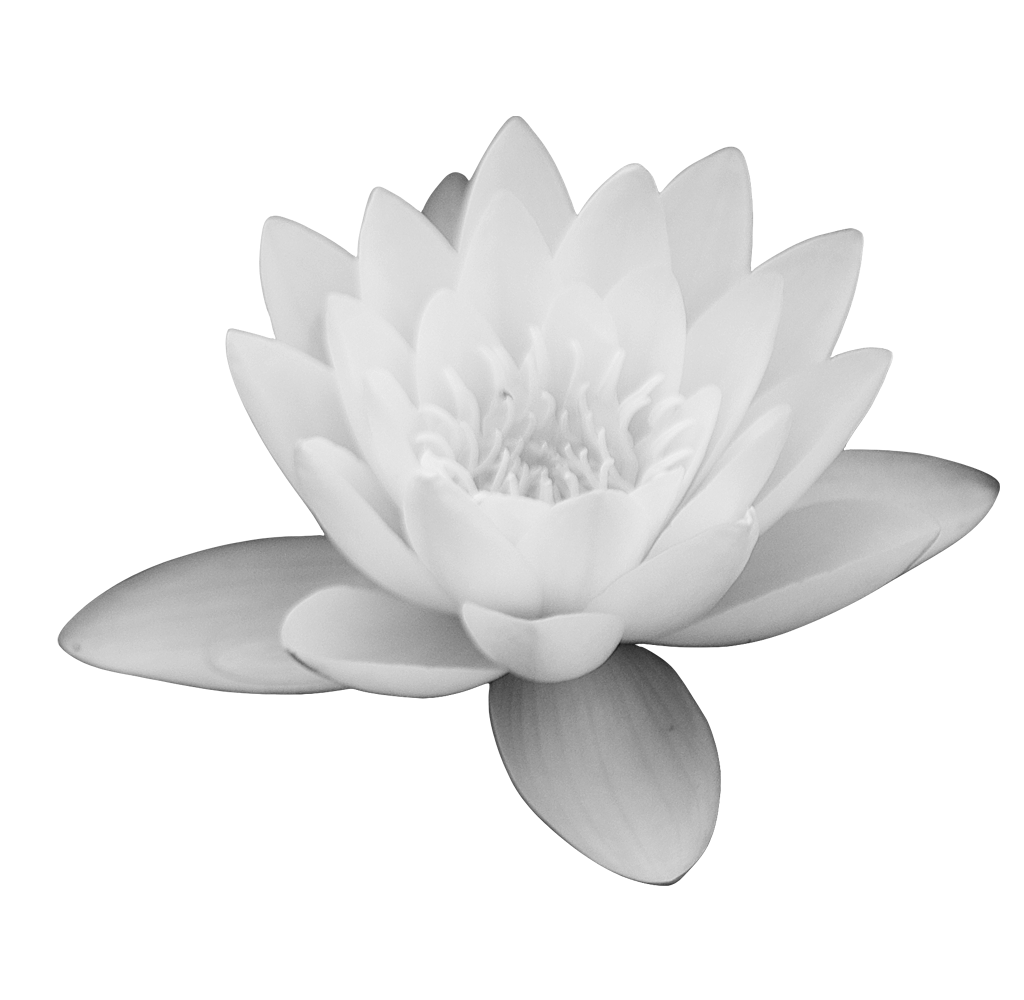lotus flower png images download #26600