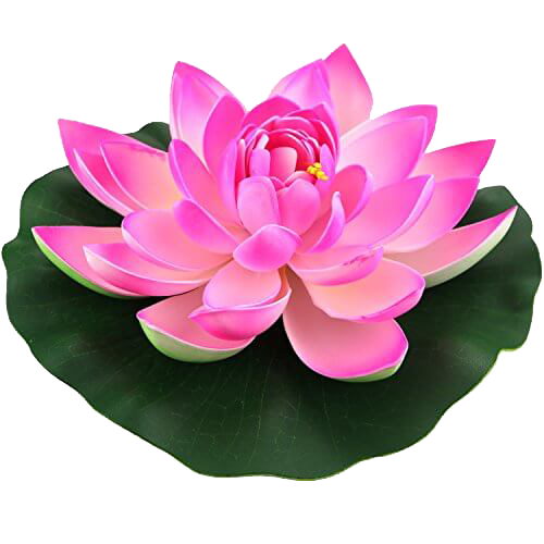 lotus png image collections are available for #26564