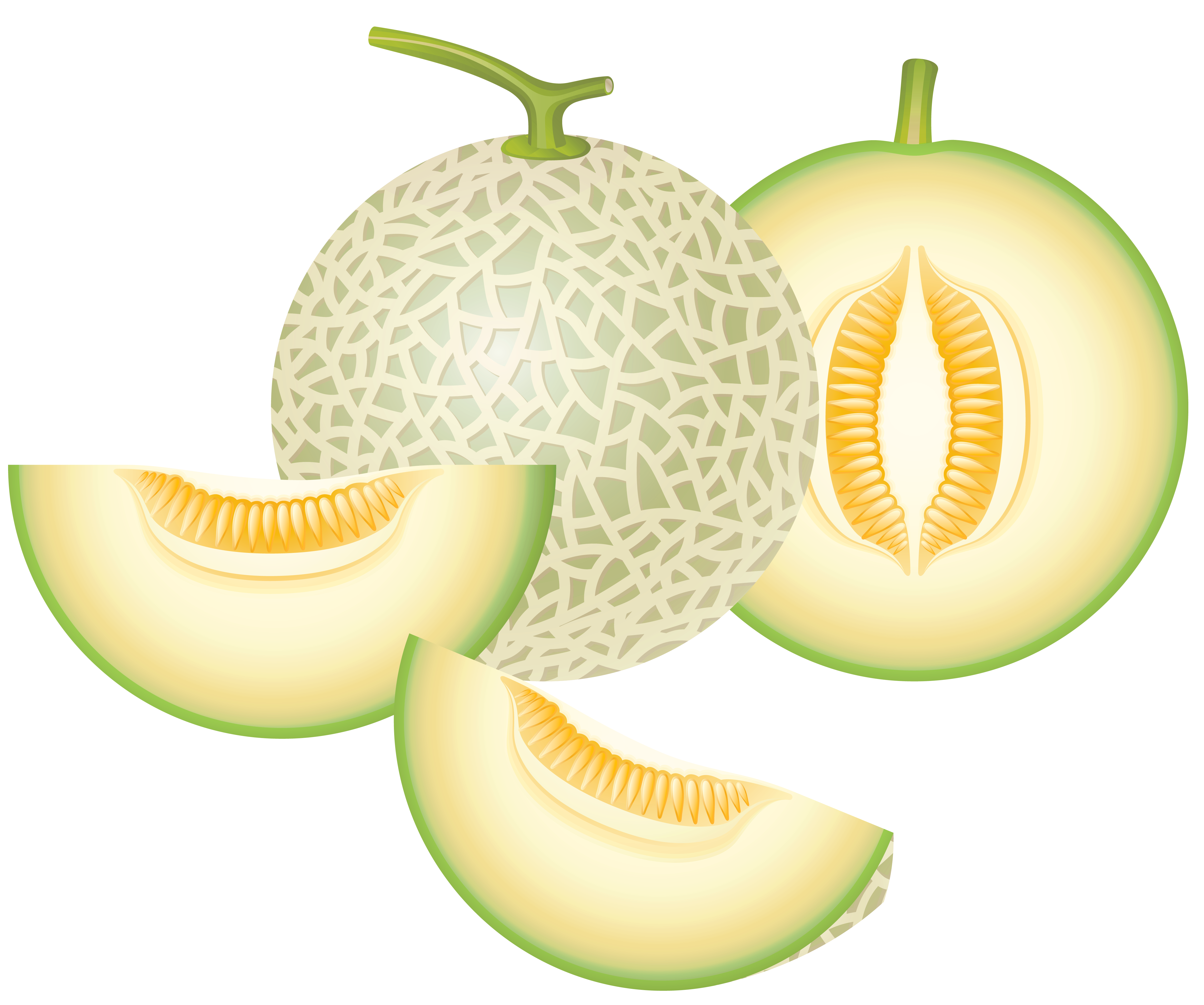 cantaloupe melon png clipart #26524