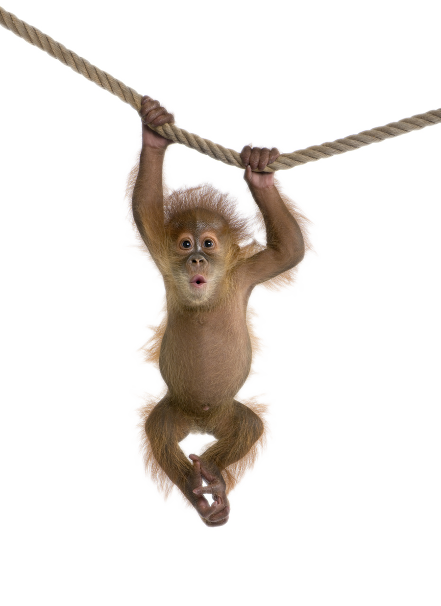 monkey png transparent images png only #19059
