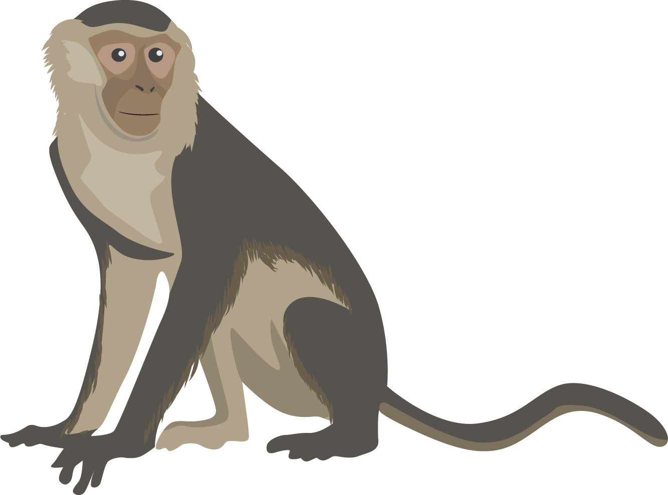 monkey png transparent images png only #19152