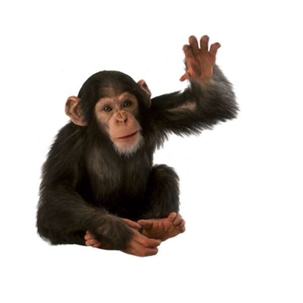 monkey png transparent images png only #19071