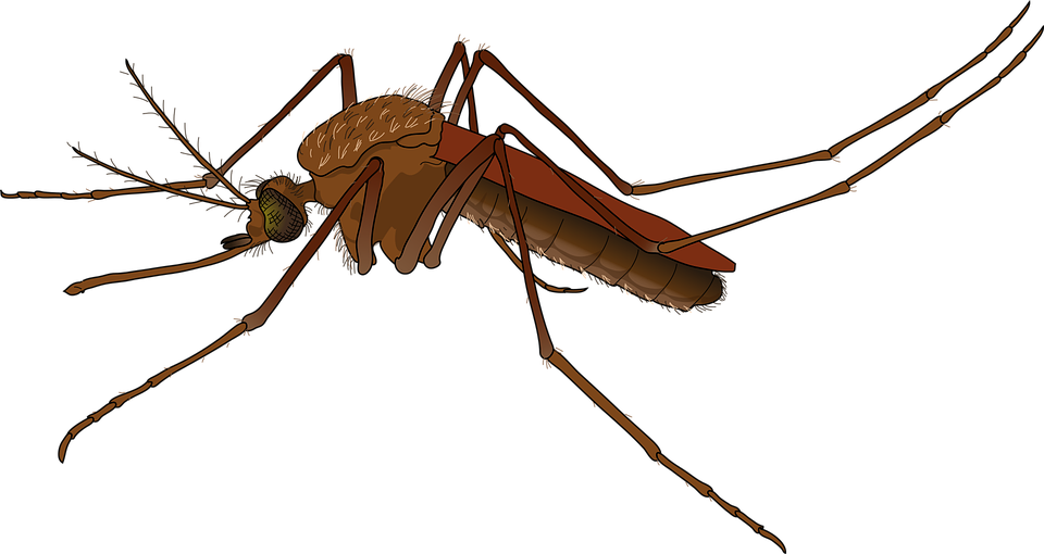 brazil health mosquito vector graphic #8911