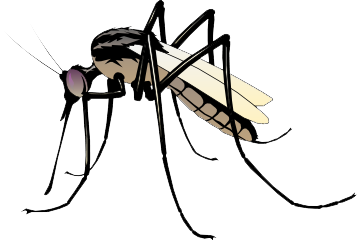 mosquito transparent images download clipart #8926