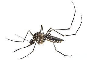 mosquito transparent images only #8924