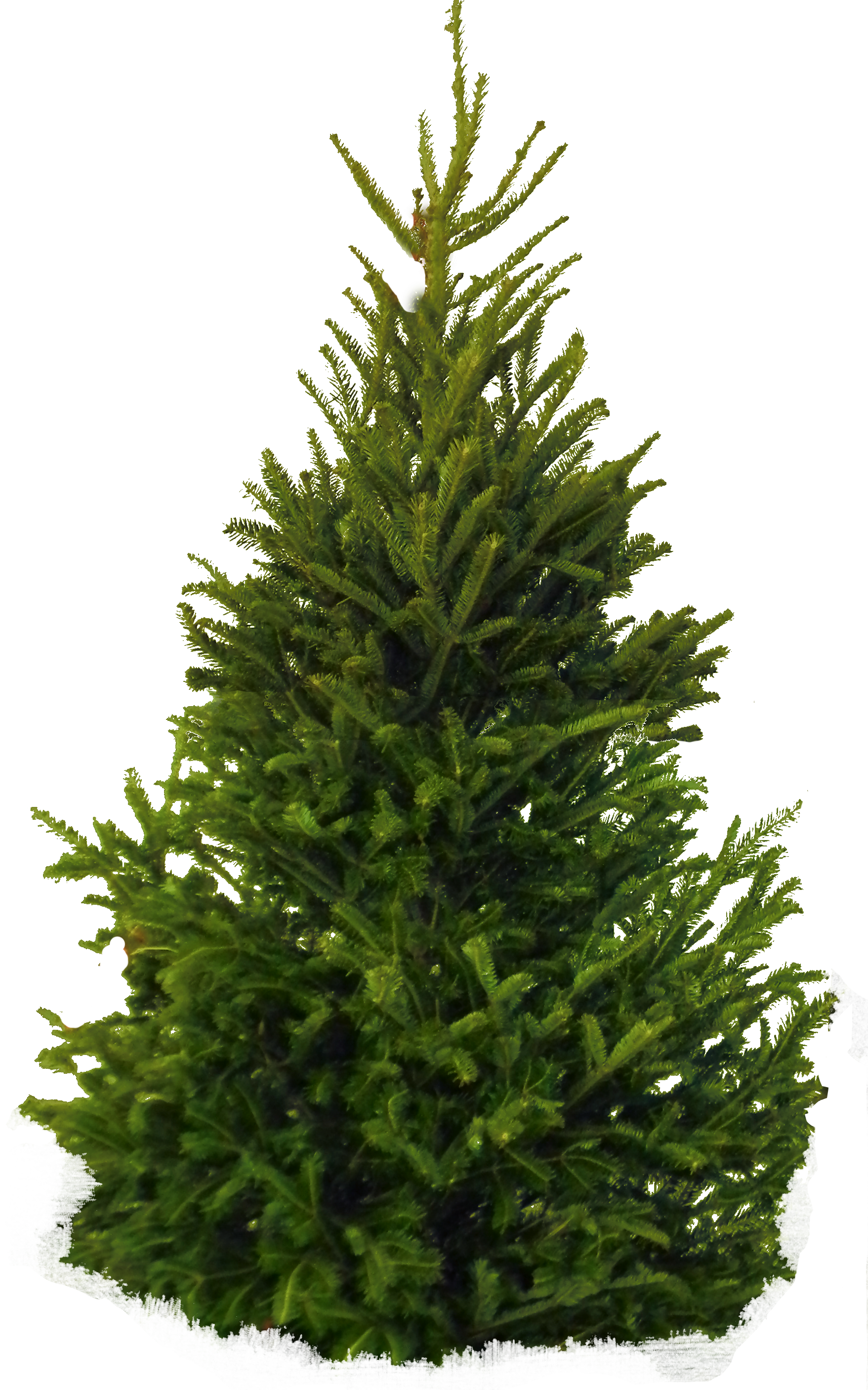green tree png #8610