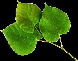 Nature PNG Images, Tree Png, Nature Logos Free Download